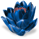 картинки цветы 1