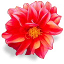 картинки цветы 2