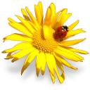 картинки цветы 3
